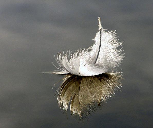 floating_feather_by_shadowlight_oak