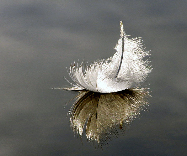 floating_feather_by_shadowlight_oak